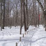 冬景色色々