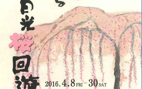 日光桜回遊2016 & 桜の観察会