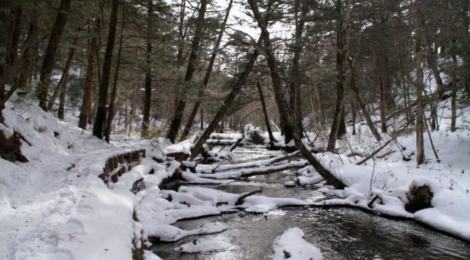 久々に冬の湯川沿い、に大集結。