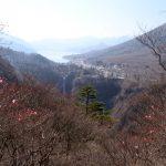 明智平のアカヤシオ開花 2018