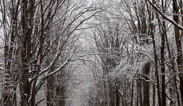 春の雪景色