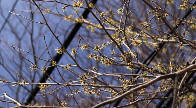 流氷現れ、春近し。