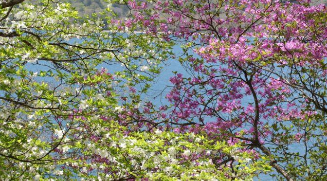 中禅寺湖北岸3連荘