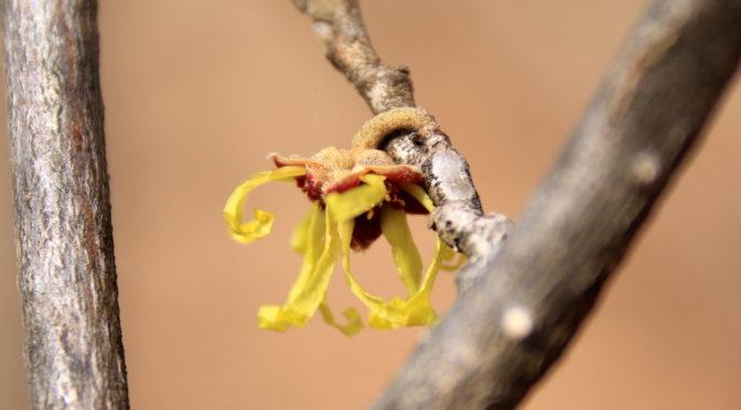 春の陽気で開花…?