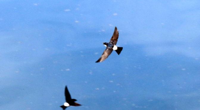 夏鳥証拠写真たち