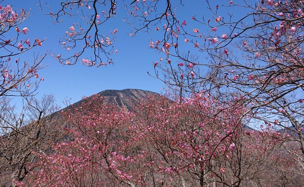 2021年4月26日 アカヤシオと男体山